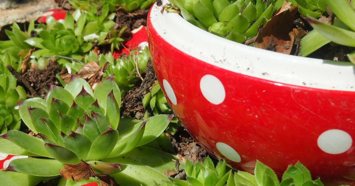 Dekoideen für den Garten mit Hauswurz und Keramik  titantina